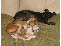 Dogs name: Penny and JoeyOwners Name: BrookeTwo good dogs. Love to snuggle