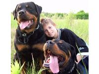 Dogs name: Stinker&Diego and Child DominikOwners Name: My Baby :)