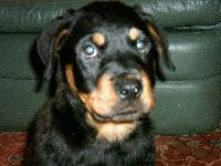 Dogs name: elleOwners Name: tom1 month old