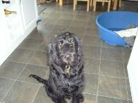 Dogs name: MiloOwners Name: MadisonHe is 1yr old.Daft as a brush,loves everybody