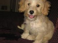 Dogs name: TimOwners Name: Tim is a 3 month old Lab-doodle hes spunky and overly excited about people on bikes.