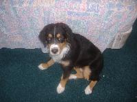 Dogs name: schdow (chado)Owners Name: alex/barb zemer