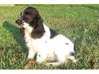 Dogs name: princessOwners Name: willTH IS MY FEMALE DOG SHE IS A VERY NICE DOG I AM GOING TO GET HER ON SATURDAY.