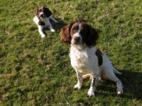 Dogs Name: Taffy and BellaBella is only 6months old and loves playing with ducks, sticks, apples and her big brother!