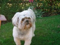 Dogs Name: TOFFEEOwners Name: WENDY AND MICHAELTHIS IS A PICTURE OF OUR BOY HE IS 4 YEARS OLD AND HE IS A REAL SWEETIE.