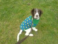Dogs Name: elsieOwners Name: graceit was too cold for her at the football match!