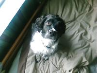 Dogs Name: dillen {robs ryde}Owners Name: daniellejust another pic coz dat other 1 is a bit blury but same dog