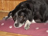 Dogs Name: ZoeyOwners Name: LaraOur Zoey is in her usual 'snoozing on her bed' pose.She is 10 years old and we adopted her 2 years ago. She has a beagle like head,with Dalmation like dlamation coloring of black and white. She's a sweetie!
