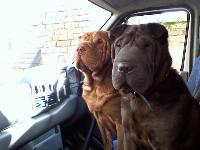 Dogs Name: Mr Bojangles and Miss Tia MariaOwners Name: SJ