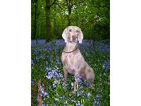 Dogs name: PhoenixOwners Name: Phoenix is nearly 4 yrs old and enjoys life in Sherwood Forest