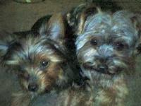 Dogs name: Ruby and RileyOwners Name: The terrible twosome