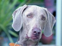 Dogs name: jakeOwners Name: lisa woodjake is two years old and full of life