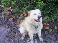 Daisy May loves hiking in the Rocky Mountains of the USA with me (here she is all dirty and happy!)  Although the Chow Chow part doesn't like swimming, she loves to go into the water up to her belly; we call her
