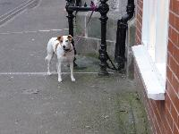 Is this dog safe left tied up outside a shop?