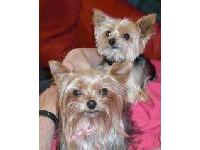 Jewel and Tia were adopted from the breeder when they were retired. Jewel is now 10 years old and Tia is 6. Jewel is Tia's mother. They are my sprites and bring an energy to our house that was missing.