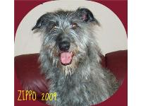 Zippo is the biggest sweetheart...you can see his smile in those eyes