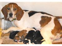 Bea the Beagle was found wandering the streets of Ballymena as a heavily pregnant stray; she recently gave birth to seven delightful puppies. The stress became too much for poor Bea, who fell ill - staff were concerned for the pups and considered hand rearing them. However, Bea, ever the devoted mum looked after them dutifully throughout her illness and made a full recovery.