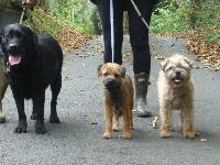 I'M LUCY IN THE MIDDLE,WITH MY 2 NEW FRIENDS,BILL AND MURPHYxx