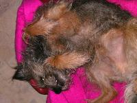 Our adopted Border Terrier from The Dogs Trust.