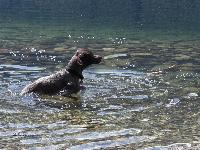 Sam isn't really a water dog, but he's slowly getting into it. This was last summer at a lake about an hour away from our house.