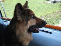 Zeus, on the bus for a day out.