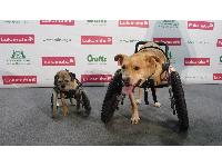Hope and Molly seemed very happy and mobile thanks to their front wheel carts.