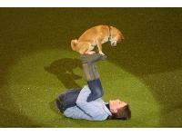 Elee the Shiba Inu with her owner Delphine Lamalle won Crufts Factor 2012 with an impressive display of tricks.