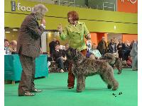 A breeder who feared a stomach infection might force her to pull her puppy from Crufts says a health product launched at Crufts 2012 (Lintbell's YUMPRO)  helped her to take a top breed prize.