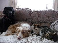 Our couch can get very crowded!
