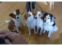 Four canine members of the Roann's Dog Therapy Team wait for a treat.