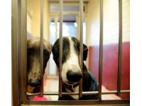 Chloe and Dale in their kennel. They met at Battersea and are looking for a new home together.
