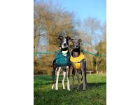 Dale and Chloe enjoy a walk. They met at Battersea and are looking for a home together.