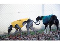 Dale following Chloe - they met at Battersea and are looking for a home together.