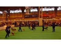 Jenny Deakin and her heelwork to music team at Crufts - including the Julie Moss with Malamute Memphis, and Sandra Hallam with deaf spaniel Henry.