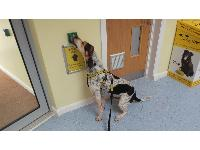 "Dogs Trust, the UK's largest dog welfare charity, is awarding £14,700 for the research project entitled ""Towards the smart kennel: a requirements elicitation study for a smart environment to support good canine welfare in kennels.""<br /> Ralph at Dogs Trust Loughborough."
