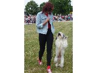 Ashleigh and Pudsey in action