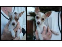 Peggy and Pip, a mother and daughter Chihuahua duo are looking for a new home thanks to the RSPCA.