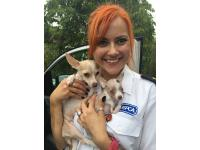 RSPCA inspector Marie Hammerton, with special needs Chihuahuas Peggy and Pip.