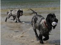 RSPCA People's Choice Award Dogs