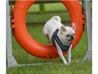 Staying fit and active is keeping Susannah Chalmers' Pugs happier and healthier.