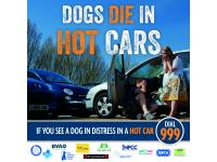 Don't leave your dog in a hot car - and don't let someone else do it either.
