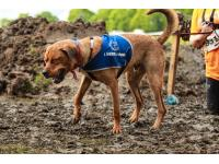 Battersea Dog Rex enjoying the muddy obstacles. Rex is looking for a home.