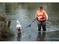 Poodle tackling the Muddy Dog Challenge