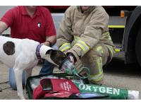 The RSPCA has joined forces with Smokey Paws to pay for one specialist animal oxygen therapy kit for every fire engine in the county - with the aim of rolling this scheme out across the whole country.