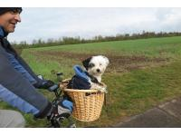 Rocky enjoying a biking trip with John.