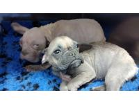 2 'ugly' alien pups rescued by the RSPCA enjoy a beautiful new life