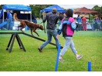 Photo Credit (Jo Moolenschot)<br /> Hounds on the Heath.
