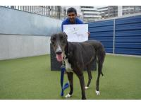 Sweet Sally is a lovely-natured Greyhound who finds life in the kennels stressful, and copes much better when she's kennelled with one of her Greyhound friends.