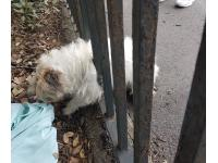 A dog on the run after escaping from her home ended up in a bit of a tight spot - wedged between fence railings!<br /> RSPCA officer called in to help with bar-king mad rescue!