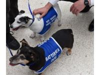 Battersea Dogs & Cats Home has today sent two adorable Jack Russell Terriers on a mission: to help make commuters at London Waterloo smile during the August engineering works.